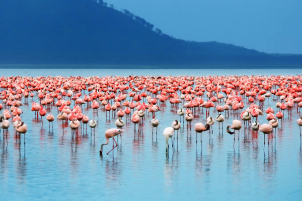 Flamingoes on Lake Bogoria