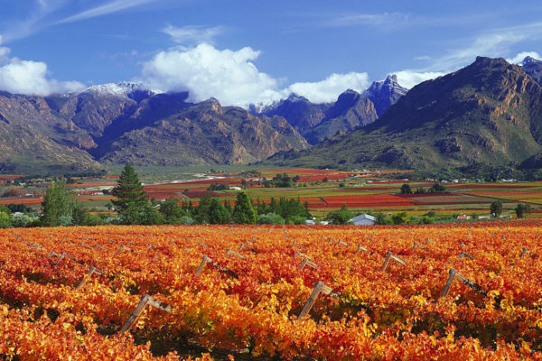 Winelands of Stellenbosch
