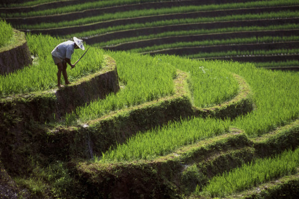 A rice paddy in Guilin