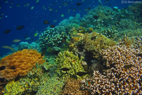 Snorkelling on coral reefs