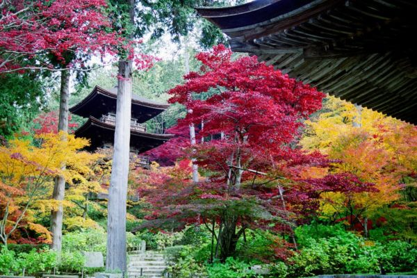Autumn colours in a Kyoto garden