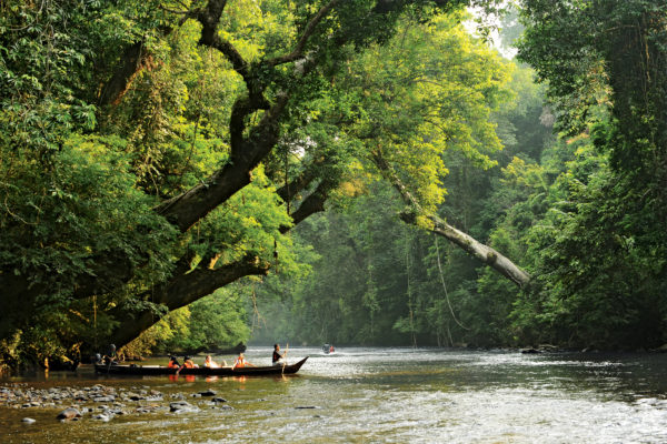 Take a boat upriver In Taman Negara National Park