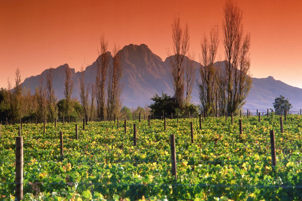 Visit the winelands